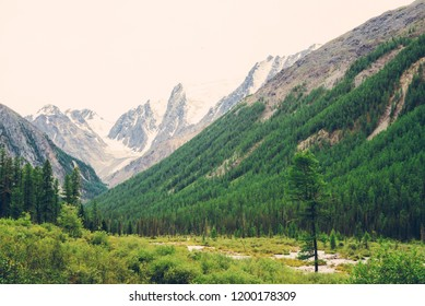 Mountain creek of serpentine shape in valley against snowy mountains. Water stream in brook against glacier. Rich vegetation and forest of highlands. Amazing atmospheric landscape of majestic nature.