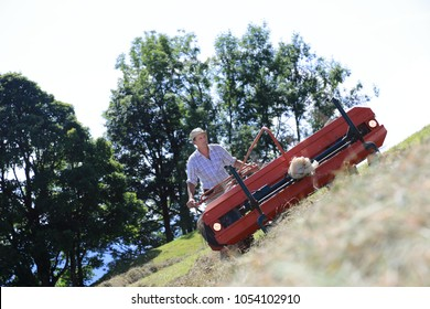 A Mountain farmer haymaking working hard