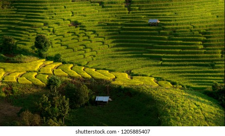 Mountain farming is also called stepping agriculture. The farmers will grow rice. Gradually down the mountain. And use water from the mountains to farm mostly hilltribes And live in northern Thailand.