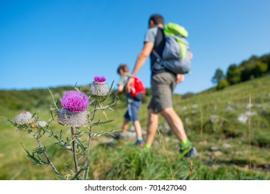 Mountain flowers with family on a hike.