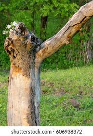 Mountain flowers grown in a tree stump