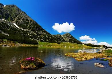 Mountain flowers in National Park Retezat, Romania