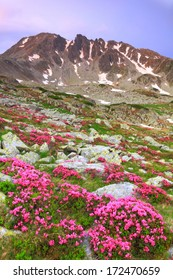 Mountain flowers scattered on green slope before sunrise