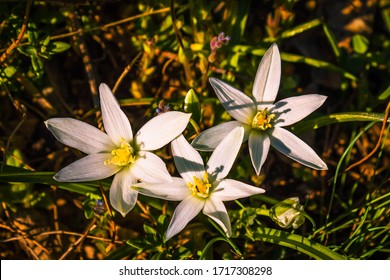 Mountain Flowers in their natural environment