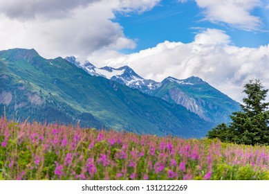 Mountain with foreground Fireweed flowers and cloudy sky Alaska