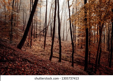 Mountain forest in autumn light