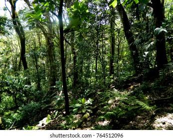 Mountain Forest Cerro El Ávila