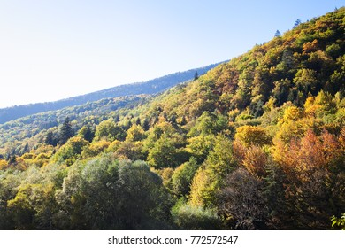 Mountain forest in the fall with blue sky and selective focus