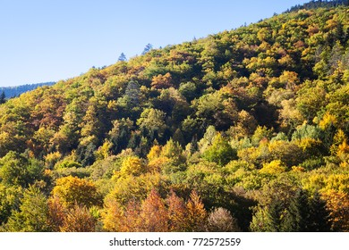 Mountain forest in the fall with blue sky