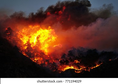 mountain forest fires