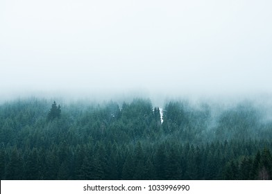 Mountain Forest with fog in winter, National Park Harz in Northern Germany