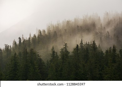 Mountain forest and foggy trees in the Carpathians