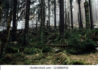 Mountain forest in the Harz national Park