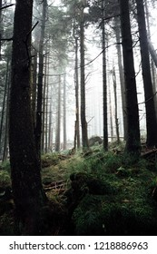 Mountain forest in the Harz national Park, Portrait