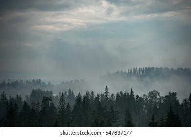 Mountain forest landscape. Dark forest in haze landscape.