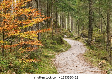 Mountain forest landscape with hiking trail through the Zauberwald (Magical Forest) in Bavaria, Germany, Ramsau bei Berchtesgaden. Autumn landscape.