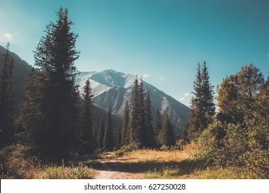 mountain forest landscape. wildlife.
