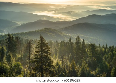 Mountain forest at misty morning. Beskidy Mountains in Poland.