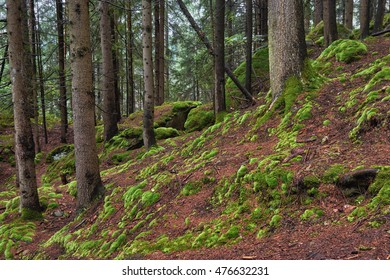 Mountain forest and moss on the ground.