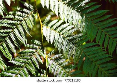 mountain forest Nuwara eliya Sri lanka