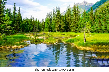 Mountain forest pond nature scenery