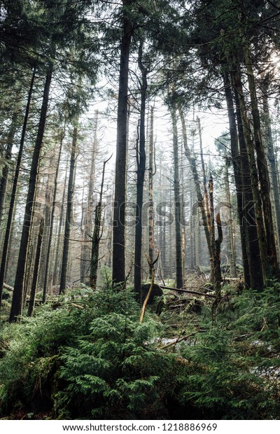 Mountain forest in the Portrait in the early Morning