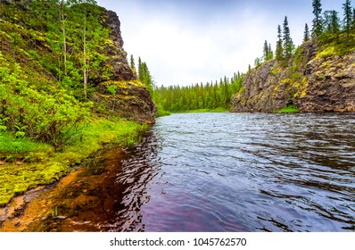 Mountain forest river landscape. River shore in woods