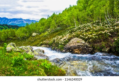 Mountain forest river landscape. Mountain forest river stream view. Forest river stream in mountains