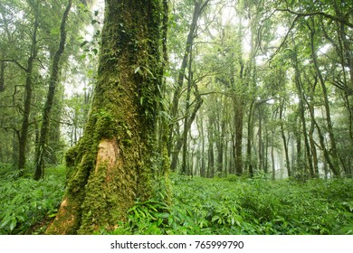 mountain forest in South east Asia
