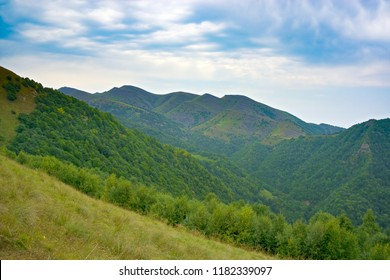 Mountain forest. Summer cloudy day. Horizontal shot