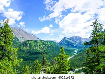 Mountain forest trees landscape