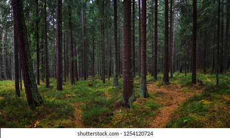 mountain forest view