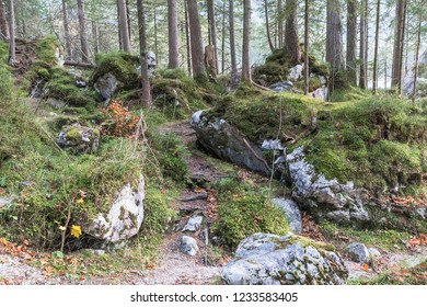 Mountain forest Zauberwald (Magical Forest) at the mountain lake Hintersee in Bavaria, Germany with boulders originating from a rockslide. Ramsau bei Berchtesgaden.