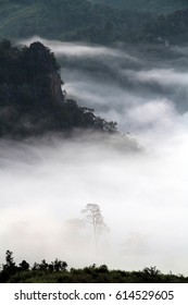 Mountain forests covering with low lying fog in early morning.