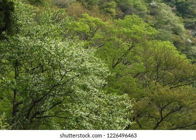 Mountain of fresh green