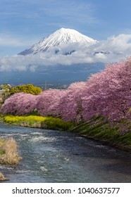 Mountain Fuji in the morning with cherry blossom or sakura in full bloom and river at Shizuoka,Japan
