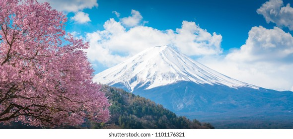 Mountain Fuji and pink Cherry blossom Sakura tree on blue sky white clound in Kawaguchiko, Japan ,Cherry blossom Sakura. Mount Fujisan beautiful landscapes.
