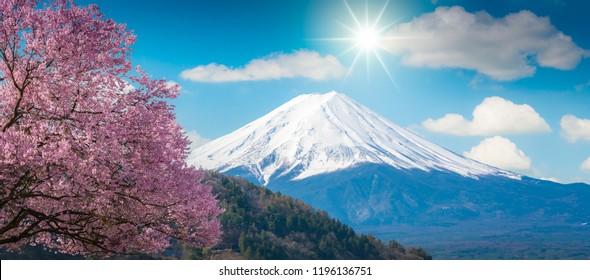 Mountain Fuji and pink Cherry blossom Sakura tree on blue sky white clound in Kawaguchiko, Japan ,Cherry blossom Sakura. Mount Fujisan beautiful landscapes.