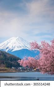 Mountain Fuji in spring ,Cherry blossom Sakura.