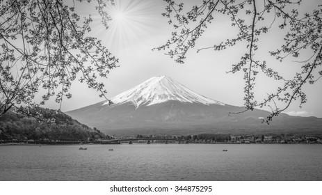 Mountain Fuji in spring , Cherry blossom Sakura , black and white