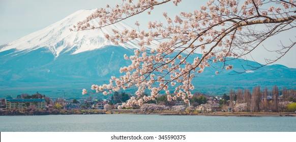 Mountain Fuji in spring ,Cherry blossom Sakura , vintage