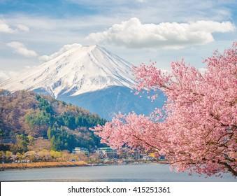 Mountain Fuji in spring at Kawaguchiko, japan. Cherry blossom Sakura.