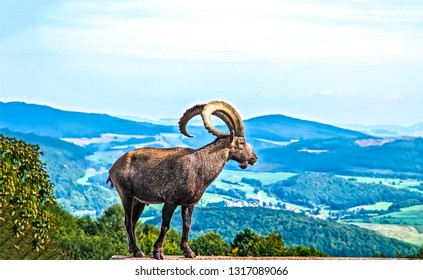 Mountain goat portrait. Mountain goat silhouette. Mountain goat view. Mountain goat profile