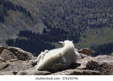 Mountain Goat View