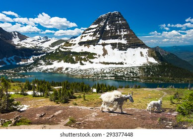 Mountain Goats and hidden lake, Glacier National Park