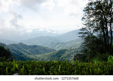 mountain and green forest in Nan province, northern of Thailand