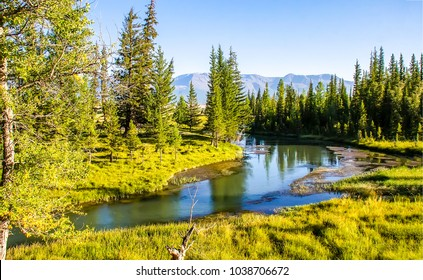 Mountain green forest river landscape