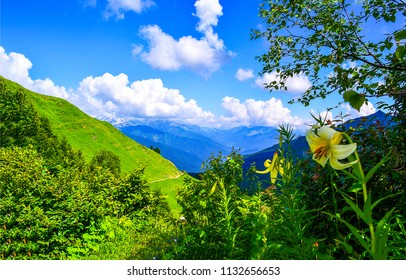 Mountain green hills landscape. Green mountain hill valley panorama. Mountain green view