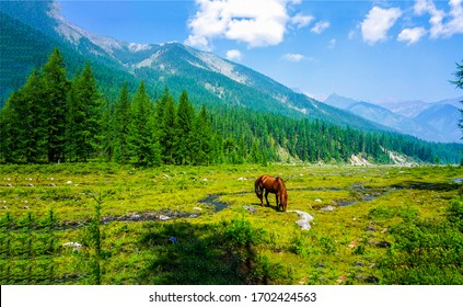 Mountain green valley horse pasture landscape. Horse grazing in mountain green valley. Mountain green valley horse