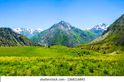 Mountain green valley landscape. Beautiful mountain green valley panorama. Mountain meadow flowers valley view. Mountain valley meadow flowers view